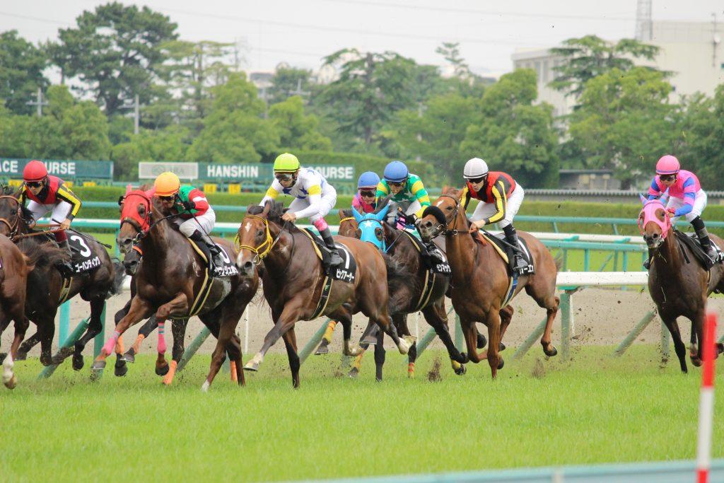 阪神競馬場で馬を撮影しよう