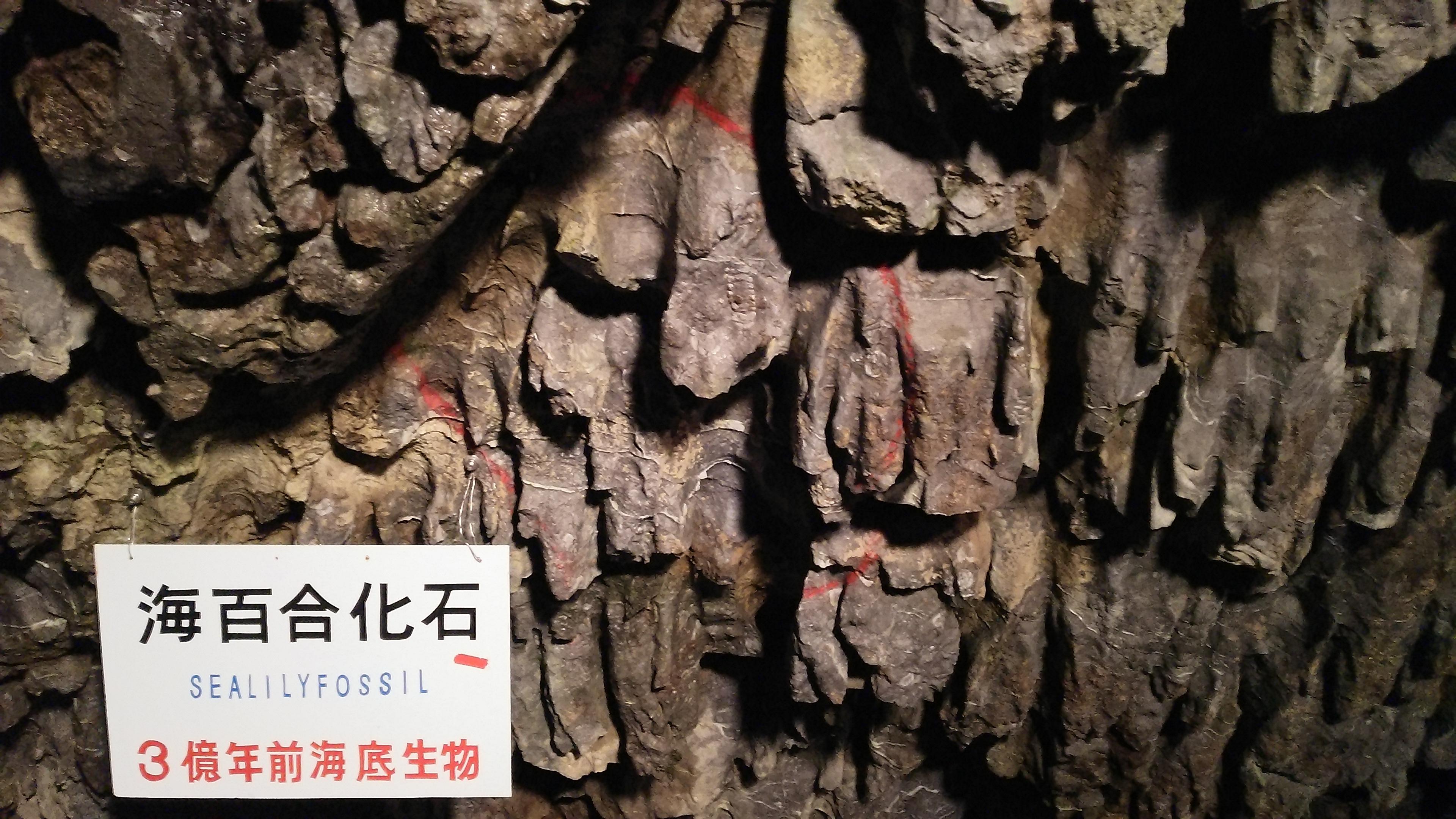 岐阜県 飛騨大鍾乳洞を探検しよう!