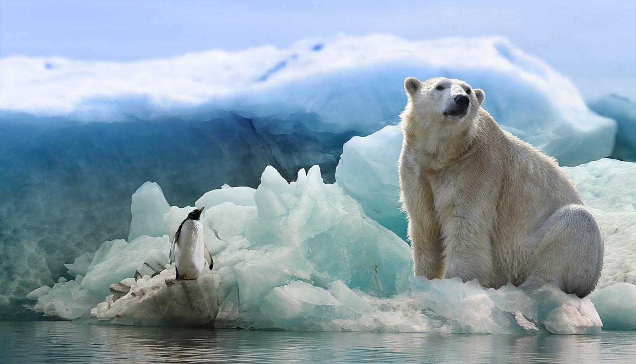 大きな敵、闘いを決意~ファーストペンギンは生き残れるのか?~