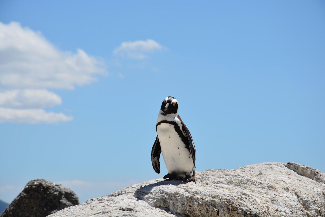 残り半年のファーストペンギン
