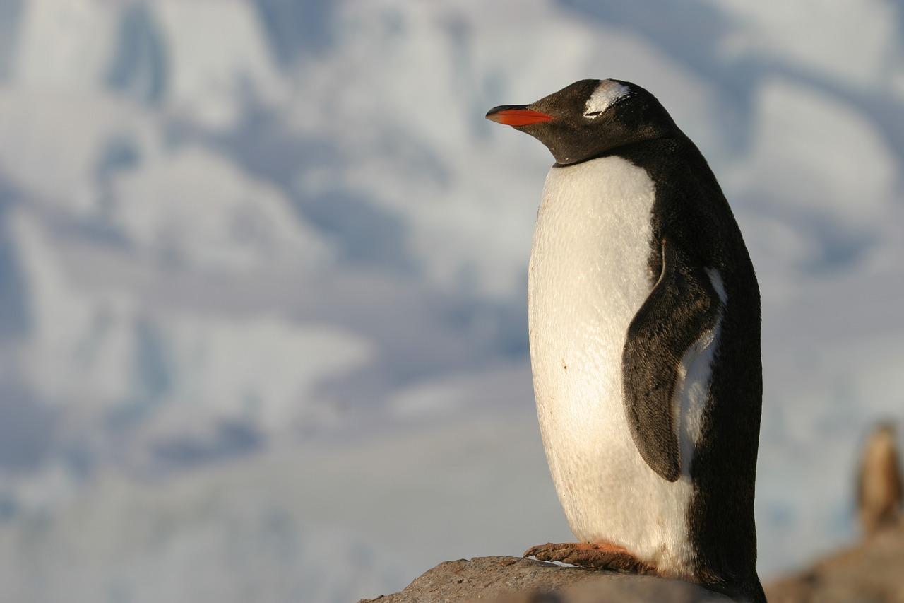 ファーストペンギンは新しい海へ